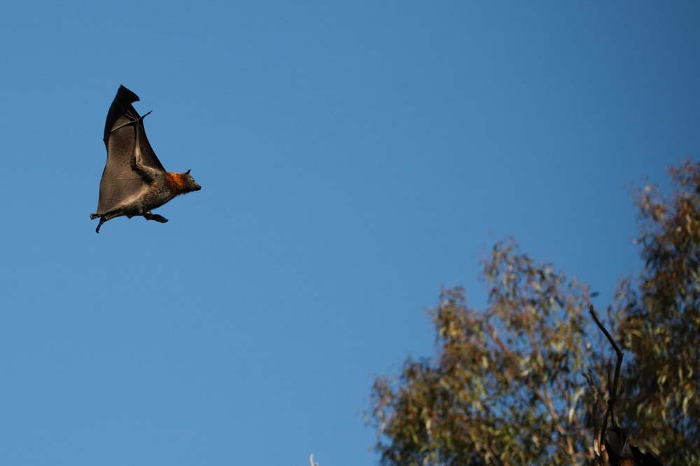 Colby Construction, Custom Lake Home Builders, Bats can be beneficial for your house
